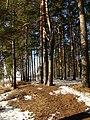Druvciema piekraste - panoramio (6).jpg