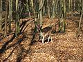 Eberswalde zoo 024.jpg