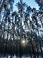 Ekaterinburg - panoramio (61).jpg
