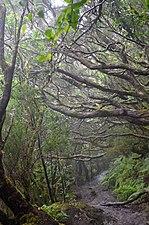 El Pijaral - Bosque encantado2.jpg