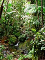 El Yunque Rainforest 08.jpg