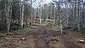 Electric Fence (Glen Lui) on Mar Lodge Estate (15MAR13) (24).jpg