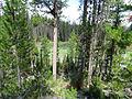 Elk Meadow Lake (15197351638).jpg