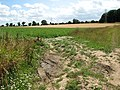Entrance into a sugar beet field - geograph.org.uk - 1411302.jpg