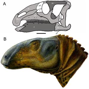 Eolambia - Skull reconstruction (A) and life restoration (B)