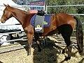 Equine massge.JPG