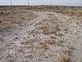 Eriogonum shockleyi var. packardiae in SW Idaho with road passing on top of 2.jpg