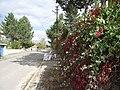 Esenyurt-Villakent, Sivas Merkez-Sivas, Turkey - panoramio.jpg