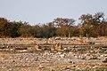Etosha, Helio area - panoramio.jpg