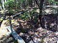 FLT M19 Spanish Loop Trail 1.45 mi - Four puncheons 2x10x8', RR tie sills - panoramio.jpg