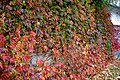 Fall Autumn (167211229).jpeg