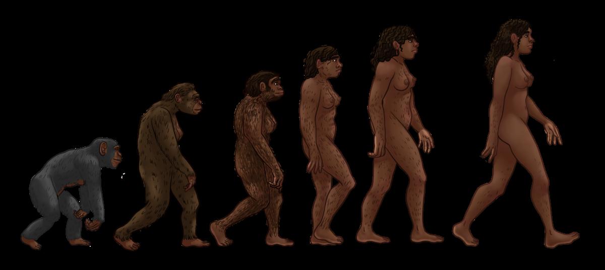 Evolución Humana Wikipedia La Enciclopedia Libre