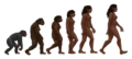 Female human evolution 2.png