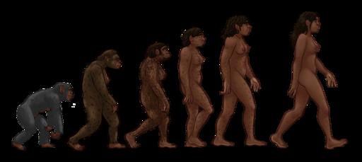 Female human evolution 2