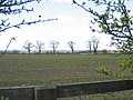 Field and Trees - geograph.org.uk - 371618.jpg