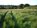 Field by lane to Pixton - geograph.org.uk - 469429.jpg