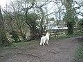 First walk in new surroundings (2) - geograph.org.uk - 1776977.jpg