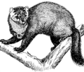 Fisher 1 (PSF).png