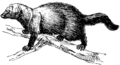 Fisher 2 (PSF).png