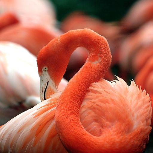Smithsonian National Zoological Park - Virtual Tour