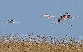 Hirkan National Park - Flamingos in Hirkan National Park