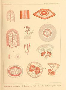 Flickr - BioDivLibrary - n240 w1150.jpg