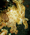 Flickr - JennyHuang - cuttlefish.jpg