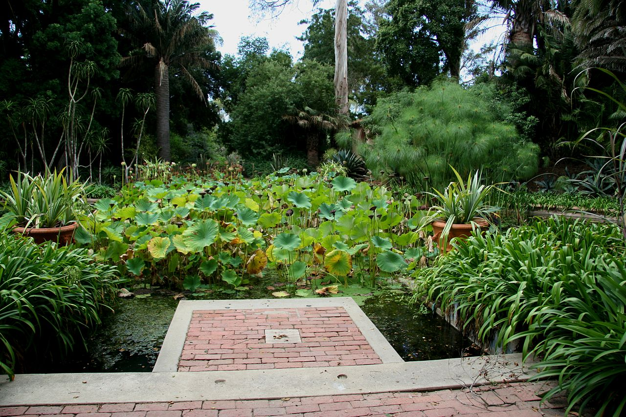 File Flickr Brewbooks Water Garden Lotusland 1 Jpg Wikimedia Commons