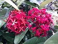 Flora del estado monagas.jpg
