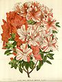 Flore des serres v16 021a.jpg