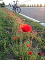Flower (110258147).jpeg
