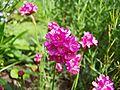 Flower Rex 25.jpg