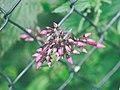 Flower fence.jpg