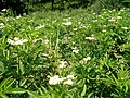 Flowers11Kokosovce14.JPG