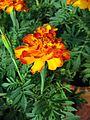 Flowers (218).jpg