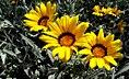 Flowers (5803031871).jpg