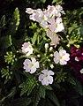 Flowers - Uncategorised Garden plants 263.JPG