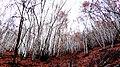 Forêt Thoard 04.jpg