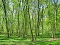 Forest - panoramio - paulnasca (102).jpg