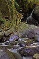 Forest Slurup.JPG