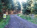Forest Track - geograph.org.uk - 577171.jpg