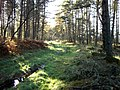 """Forest track in """"The Wilderness"""". - geograph.org.uk - 1572912.jpg"""
