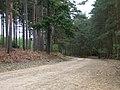 Forestry track, Yateley Heath - geograph.org.uk - 170342.jpg