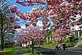 Frühling im Bad Mergentheimer Kurpark. 27.jpg