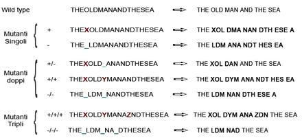 Esempi di effetti di mutazioni frameshift