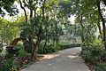 Garden - Agri-Horticultural Society of India - Alipore - Kolkata 2013-01-05 2226.JPG