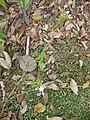 Gardenology.org-IMG 7297 qsbg11mar.jpg