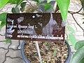 Gardenology.org-IMG 7672 qsbg11mar.jpg