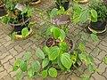 Gardenology.org-IMG 7736 qsbg11mar.jpg