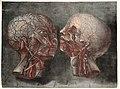 Gautier D'Agoty; Anatomie de la tete... Wellcome L0023747.jpg